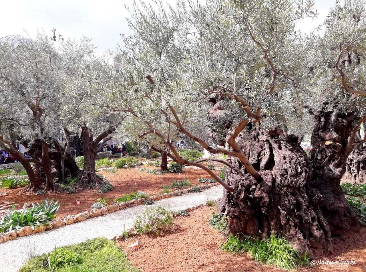 Getsiman's garden, Jerusalem, Israel, Izrael