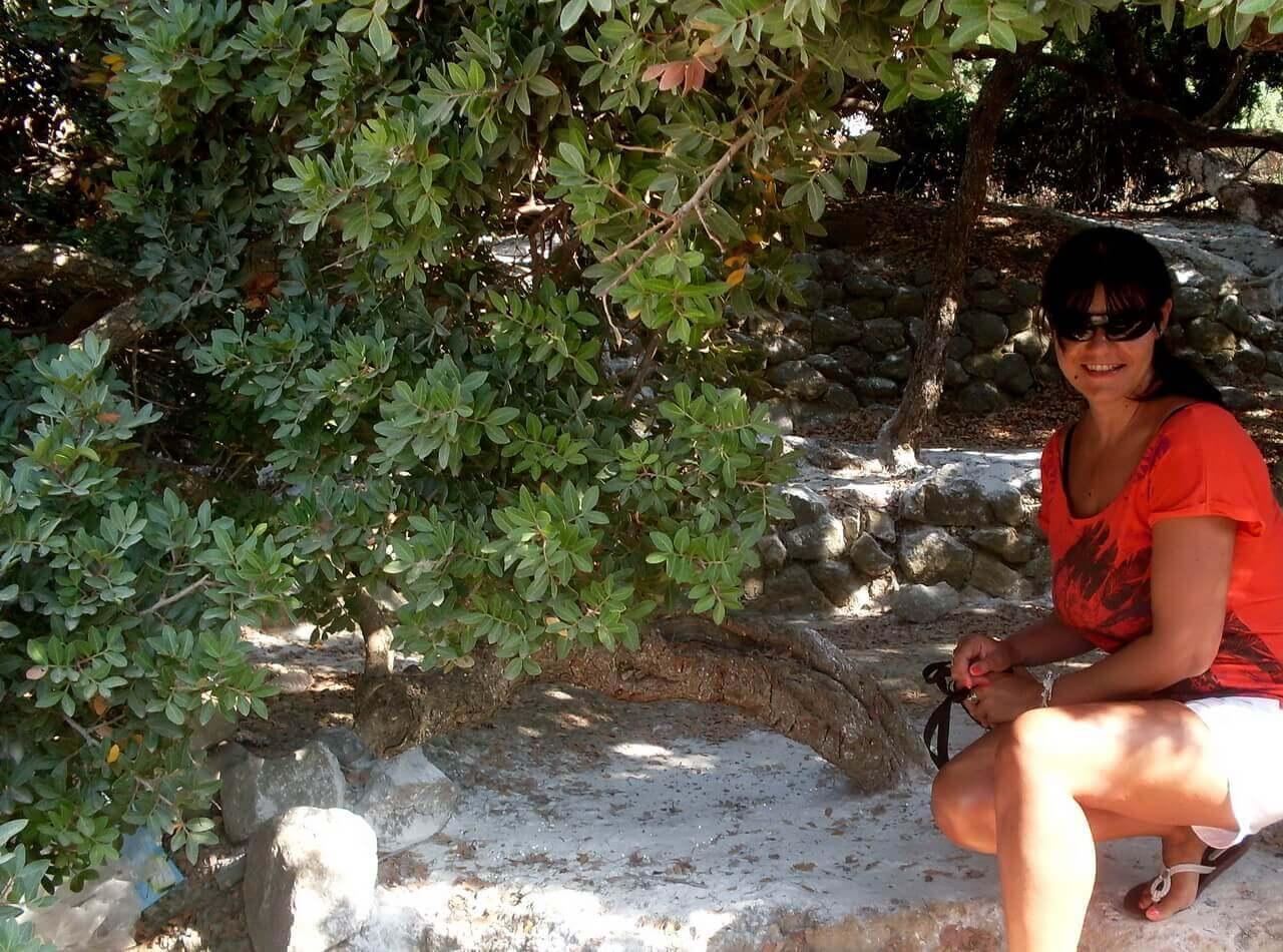 Mastiha tree, Armolia, Chios, mastika