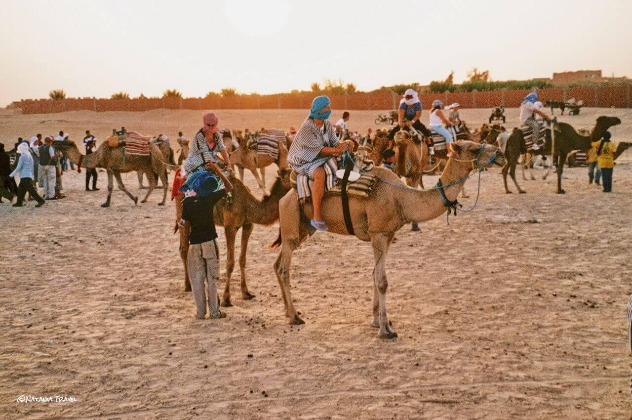Riding camels in desert, Sahara