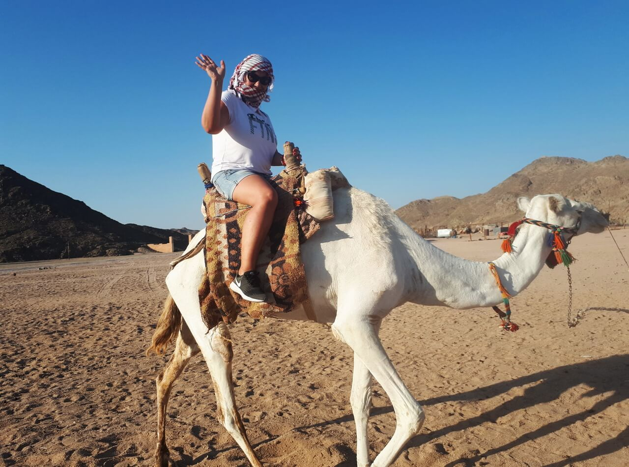 Riding camel, Hurghada desert
