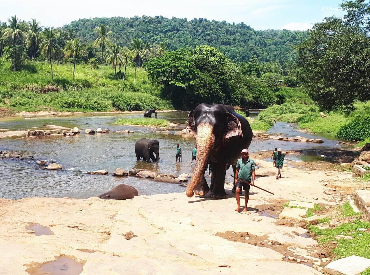 Elephants, Ma Oya River
