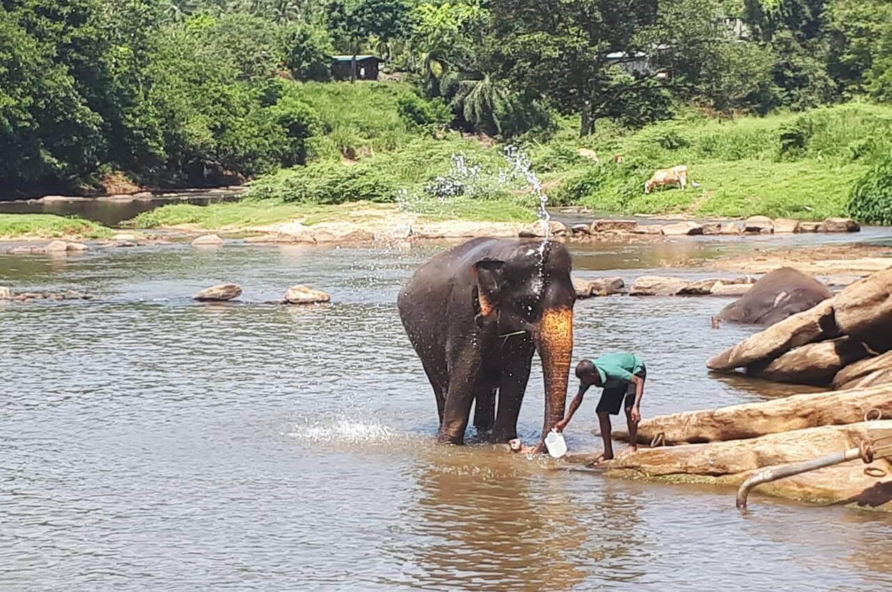 Bathing time in Pinnawala, Sri Lanka