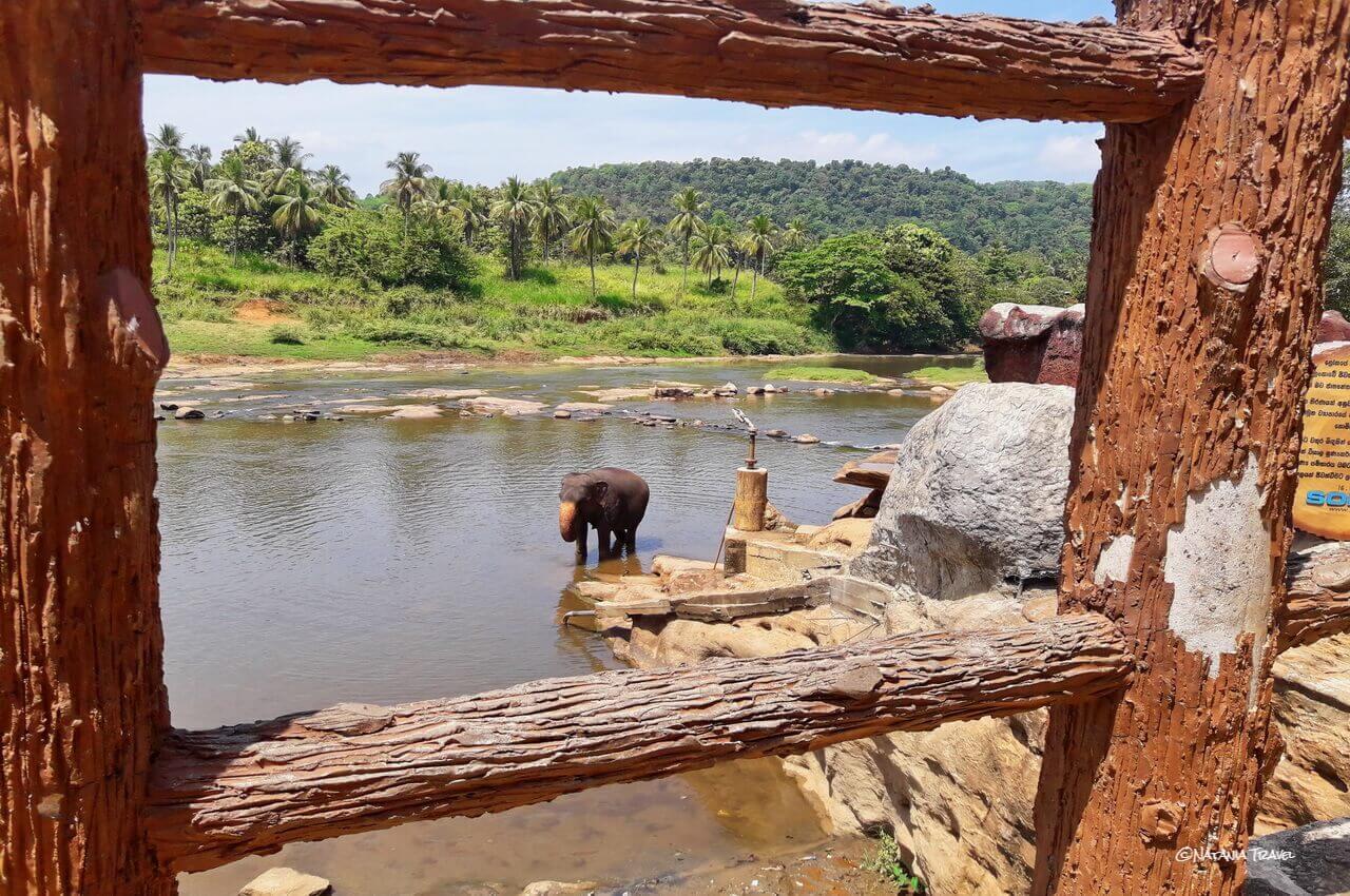 Pinnavala and Ma Oya river