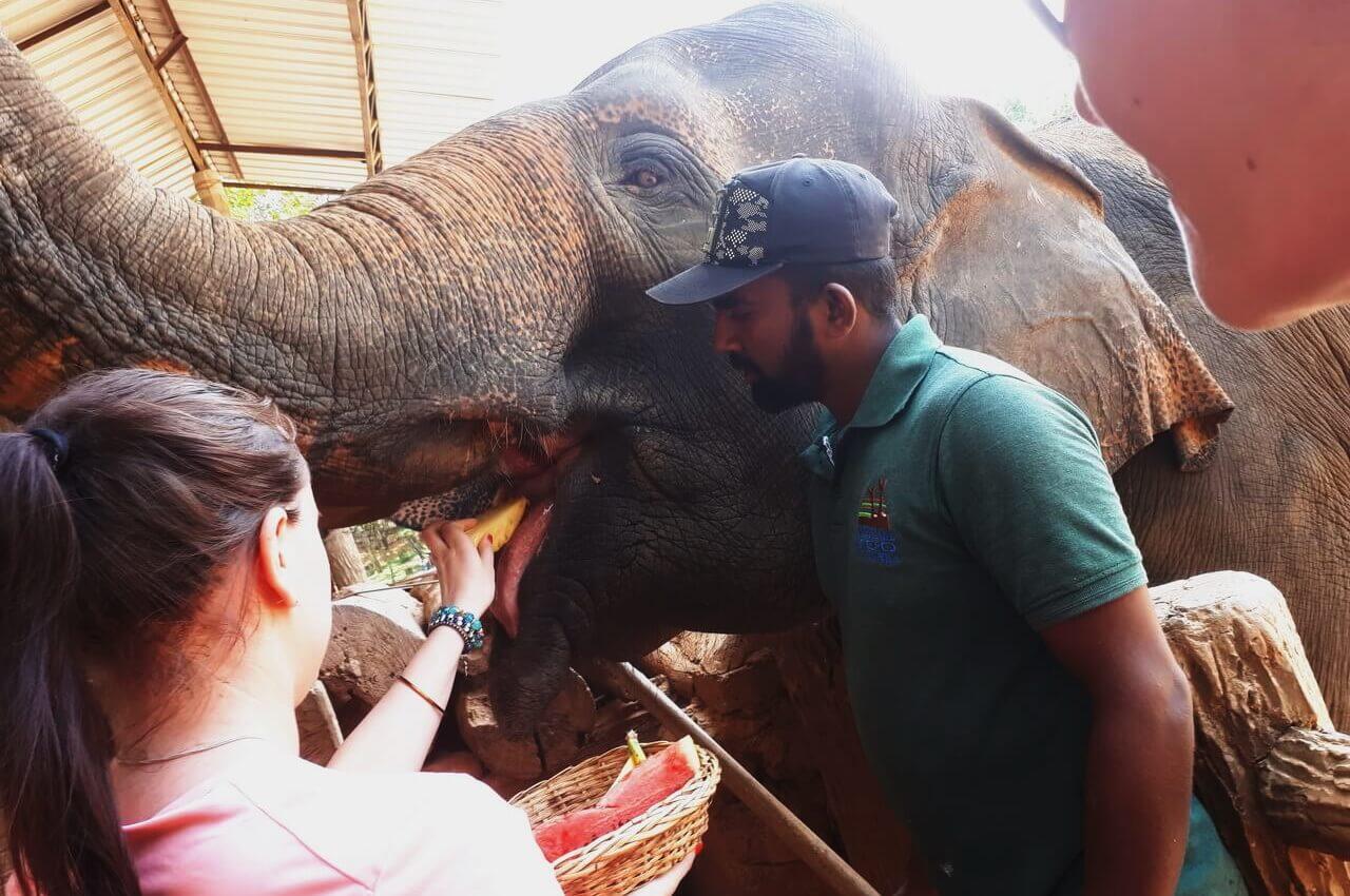 Feeding the elephant with fruit