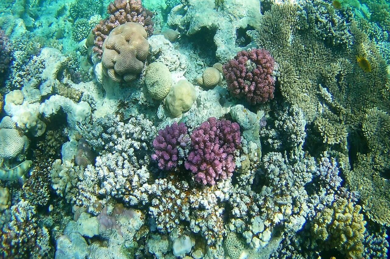 Corals, Red Sea, Hurghada