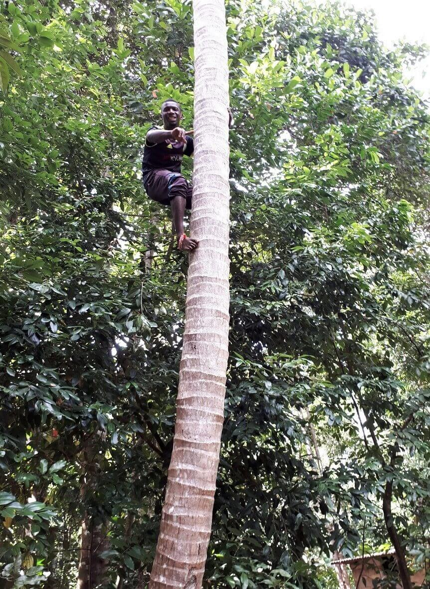 Climbing on a palm tree, spice farm Zanzibar