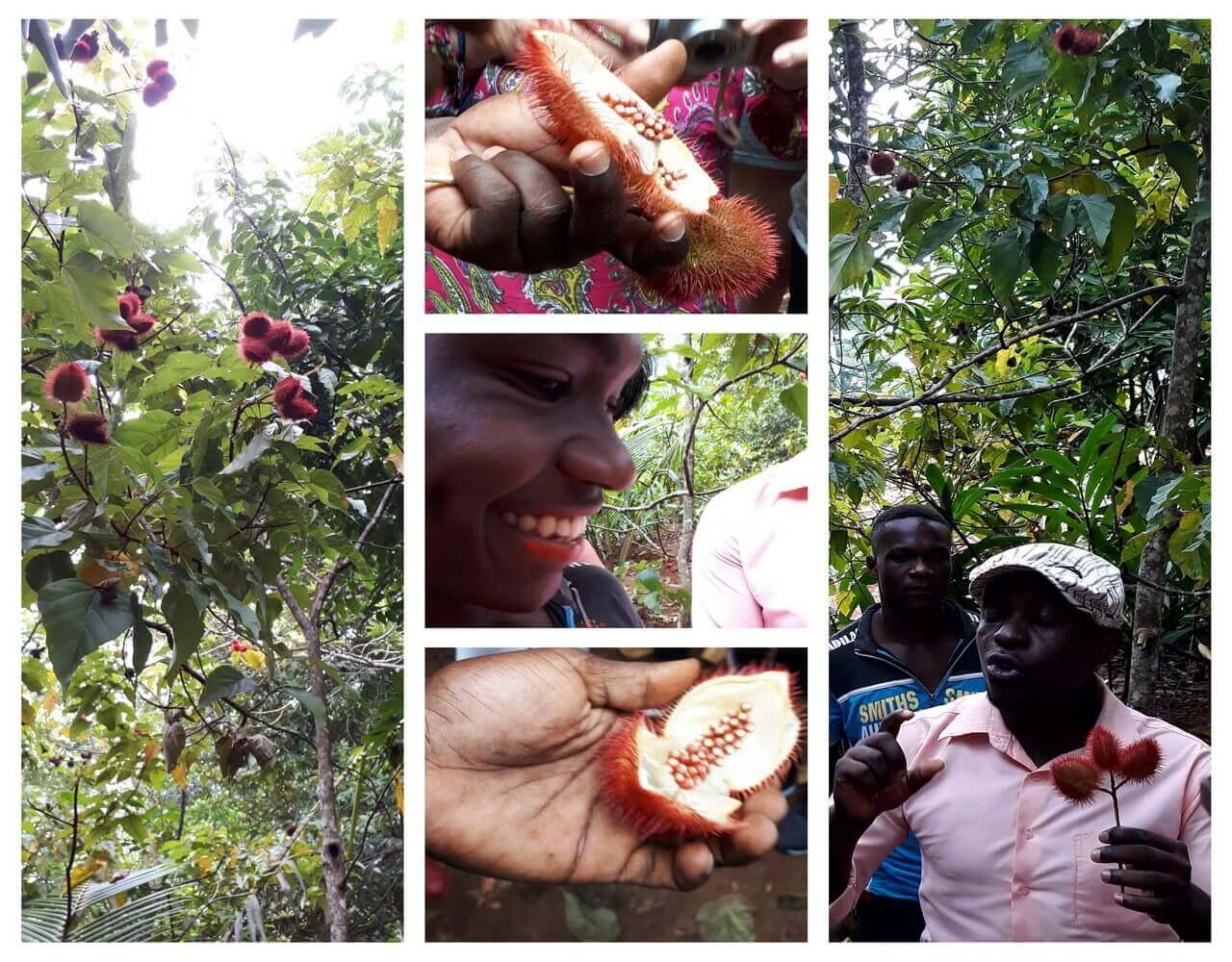 Lipstick fruit, Jambo Spice Farm Dole