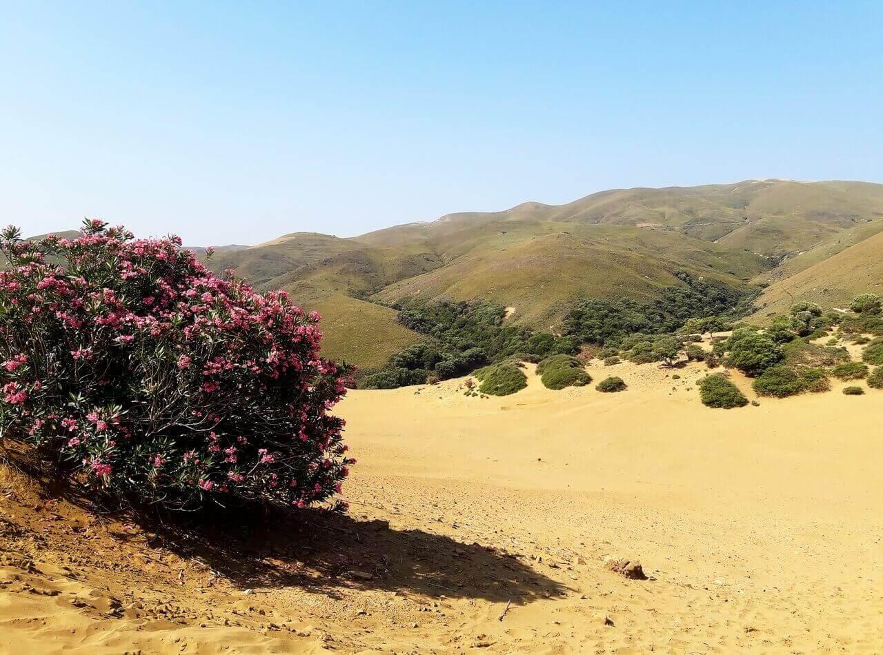 Ammothines sand desert, Limnos