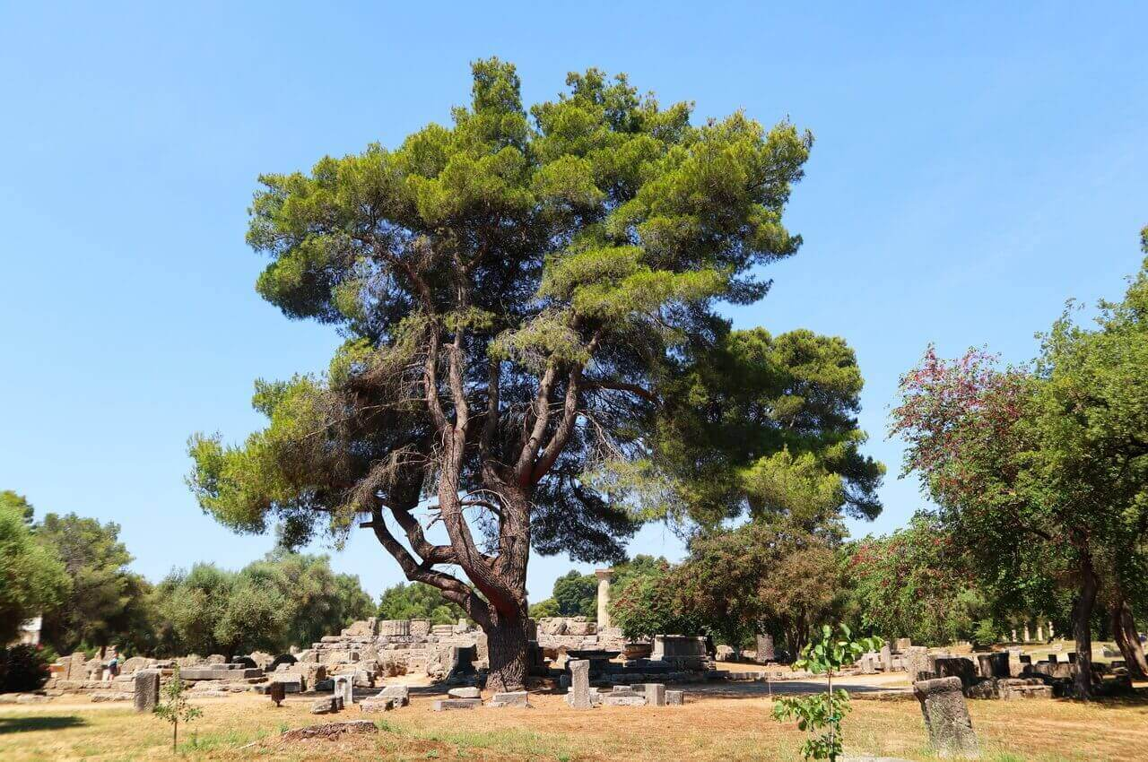Ancient Olympia, The temple of Zeus